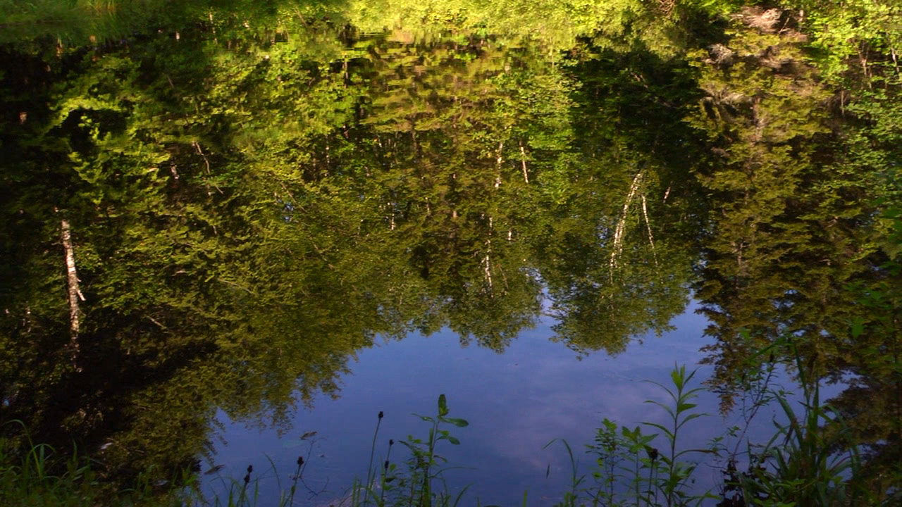 Refections in the Cole Pond